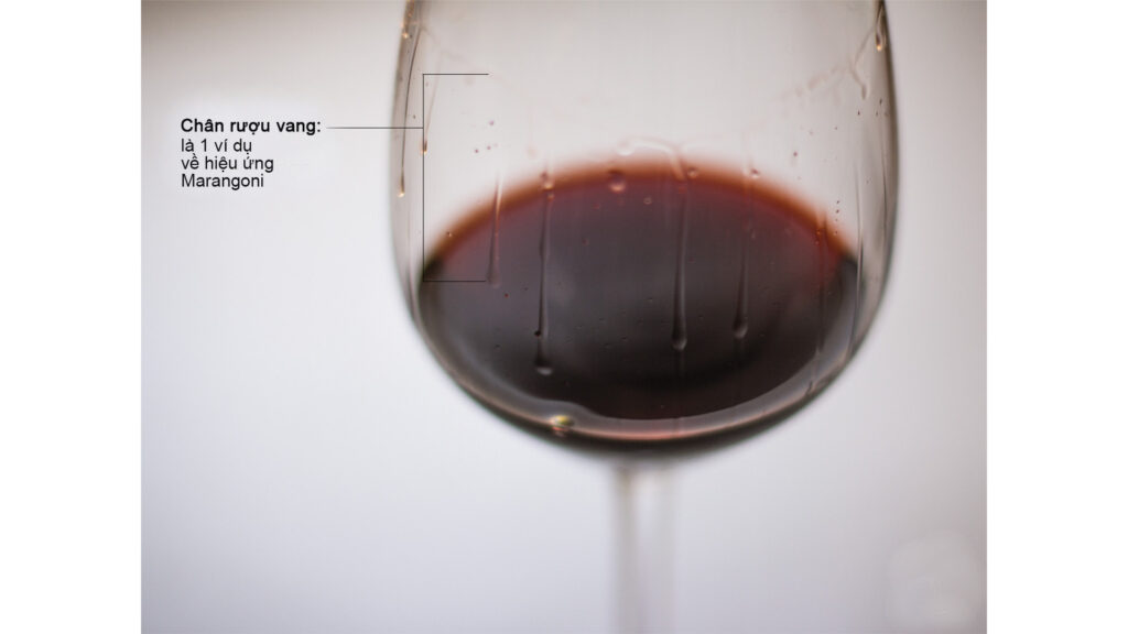 Chân Rượu Vang