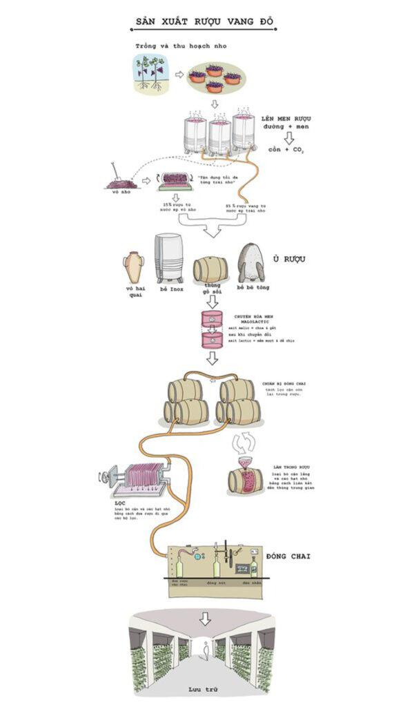 Rượu Vang Đỏ Được Sản Xuất Như Thế Nào