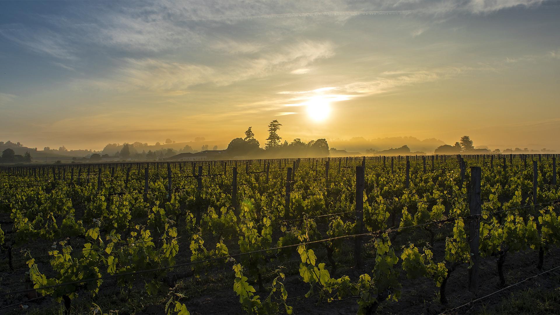 Rượu Vang Chateau Canon la Gaffeliere